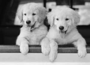 Topeka KS Pet Vaccinations